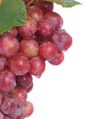 Fresh grape — Stock Photo