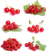 Currant collection — Stock Photo