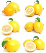 Collezione di limone — Foto Stock