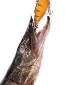 Balık pike — Stockfoto