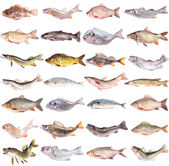 Fish collection — Stock Photo