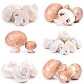 Mushrooms champignon — Stock Photo