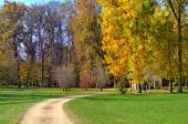 Footpath and trees with autumnal foliage in Italy. — Stock Photo