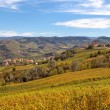 Autumnal view of vineyards in Piedmont, Italy. — Stock Photo #53506031