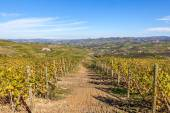 Autumnal vineyards of Piedmont, Italy, — Stock Photo