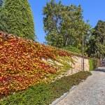 Autumnal ivy on brick wall. — Stock Photo #53759771