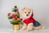 Puppy meets New Year in studio — Stock Photo