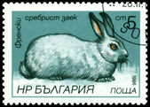 Vintage  postage stamp. French silvery rabbit. — Stock Photo