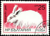 Vintage  postage stamp. Angora rabbit. — Stock Photo