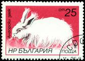 Vintage  postage stamp. Angora rabbit. — Stock Photo