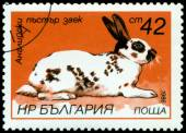 Vintage  postage stamp. English motley rabbit. — Stock Photo