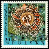 老式的邮票。花西番莲垦. — 图库照片