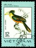 Vintage  postage stamp. Bird Ptilolaemus tickelli. — Stock Photo