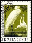 Vintage  postage stamp. Great white egrets. — Stock Photo