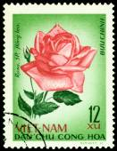Vintage  postage stamp. The Flowerses of the rose Hong leo. — Stock Photo