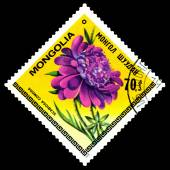 Vintage  postage stamp. The Flowerses scabiosa comosa. — Stock Photo