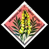 Vintage  postage stamp. The Flowerses sophora alopecuroides. — Stock Photo