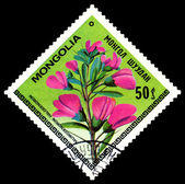 Vintage  postage stamp. The Flowerses halimodendron halodendron. — Stock Photo