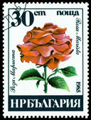 Vintage  postage stamp. Rosa Marista. — Stockfoto