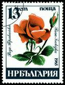 Vintage  postage stamp. Rosa Trakijka. — Stockfoto