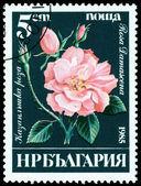 Vintage  postage stamp. Rosa  Damascena. — Stockfoto