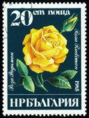 Vintage  postage stamp. Rosa  Radiman. — Stockfoto