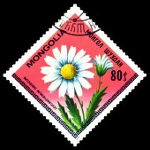 Vintage  postage stamp. The Flowerses Leucanthemum Sibiricum. — Stock Photo
