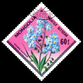 Vintage  postage stamp. The Flowerses Myosotis Asiatica. — Stock Photo
