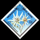Vintage  postage stamp. The Flowerses Leontopodium Ochroleucum. — Stock Photo