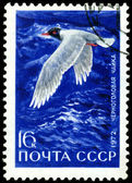 Vintage  postage stamp. CHernogolovaya sea gull. — Stock Photo