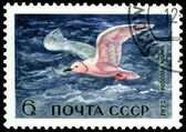 Vintage  postage stamp. Rose sea gull. — Stock Photo