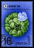 Vintage  postage stamp. EXPO 74. Rose. — Stock Photo