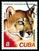 Vintage  postage stamp. Wild big cats. Puma. — Stock Photo