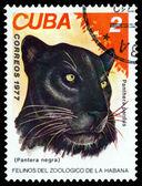 Vintage  postage stamp. Wild big cats. Black Panther. — Stok fotoğraf