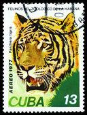Vintage  postage stamp. Wild big cats. Tiger . — Stock Photo