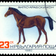 Vintage postage stamp. Anglo-Arabian horse. — Stock Photo #58701721