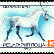 Vintage  postage stamp.  Arabian Horse. — Stock Photo #58701725