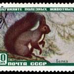 ������, ������: Vintage postage stamp Protein