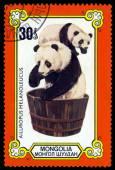 Vintage  postage stamp. Female and cub in washtub. — Stok fotoğraf