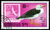 Vintage  postage stamp. Great black- backed gull and Canada. — Stock Photo