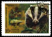 Vintage  postage stamp. Badger. — Stock Photo
