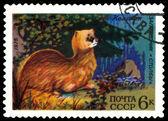 Vintage  postage stamp. Siberian Marten. — Stock Photo