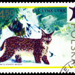 Vintage  postage stamp. Lynx. — Stock Photo #62237887