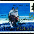 Vintage  postage stamp. Wolf. — Stock Photo #62237893