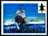Vintage  postage stamp. Wolf. — Stock Photo