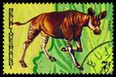 Vintage  postage stamp. Animals Burundi, Okapi.1. — Stock Photo