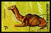 Vintage  postage stamp. Animals Burundi, Dromadaire. — Stock Photo