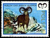 Vintage  postage stamp. Moufflon. — Stock Photo