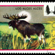 Vintage  postage stamp. Moose. — Stock Photo #62416047