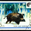 Vintage  postage stamp. Wild boar. — Stock Photo #62416051